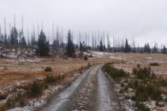 Luzenské údolí - les