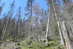 P5150038_Vltavský_les